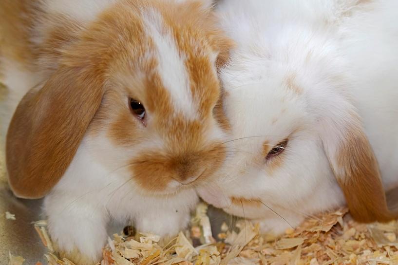 Пушистое преступление: у омички украли 11 кроликов