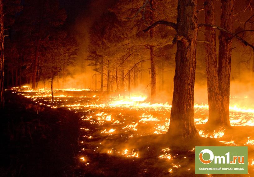 Не потушив сигареты, мужчина сжег 4,4 гектара леса в Омской области