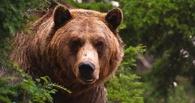 Виктор Назаров разрешил отстрел 98 медведей