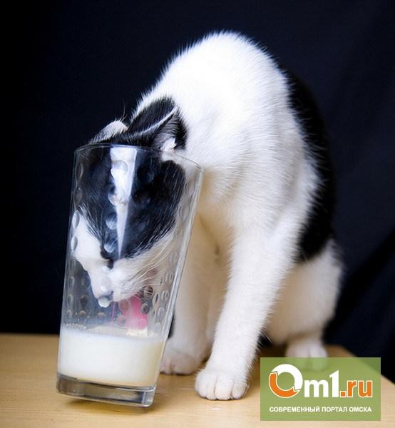 Мифы о молоке: почему «вредный» продукт полезен?