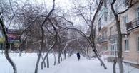 Омичи просят Назарова и Двораковского не вырубать деревья на Красном пути