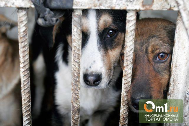 Собачий приют на Барабинской открыл сайт и «горячую линию»