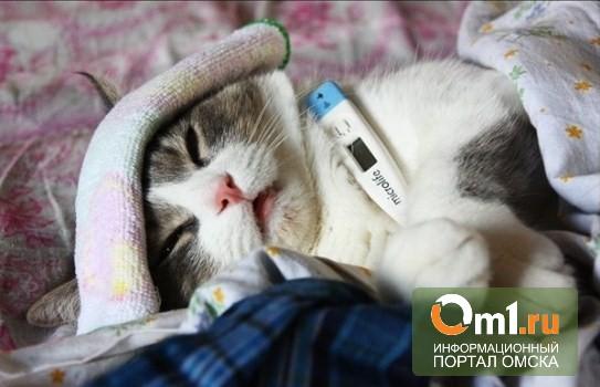 В Омске продолжается эпидемия гриппа и ОРВИ