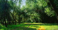 Омские парки станут особо охраняемыми природными зонами