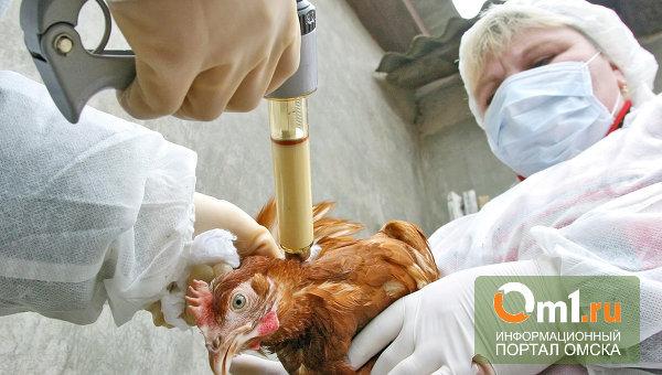 В Омске и области готовятся к защите от птичьего гриппа из Китая