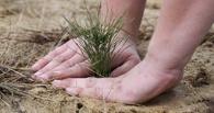 Федералы дадут денег на истребление шелкопряда в лесах Омской области