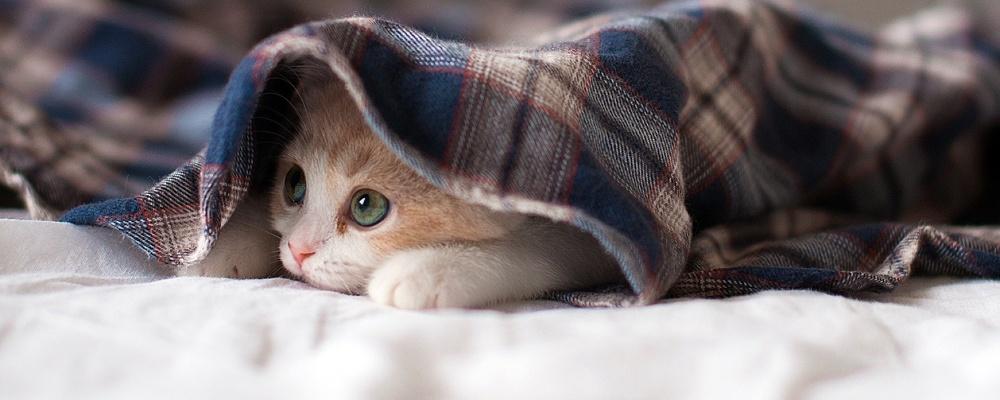 Теплые носки и пара одеял: как омичи согреваются, пока в квартирах нет отопления (опрос)
