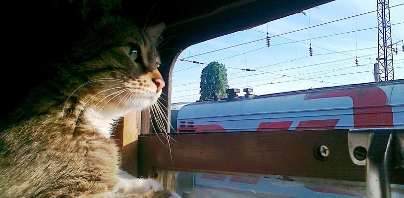 С декабря пассажиры снова смогут возить животных в плацкартных вагонах