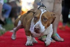 В Америке выбрали самую уродливую в мире собаку