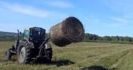 В Омской области парень на тракторе украл 13 рулонов сена