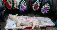 Злые украинские аграрии принесли к зданию Верховной рады гроб со свиньей