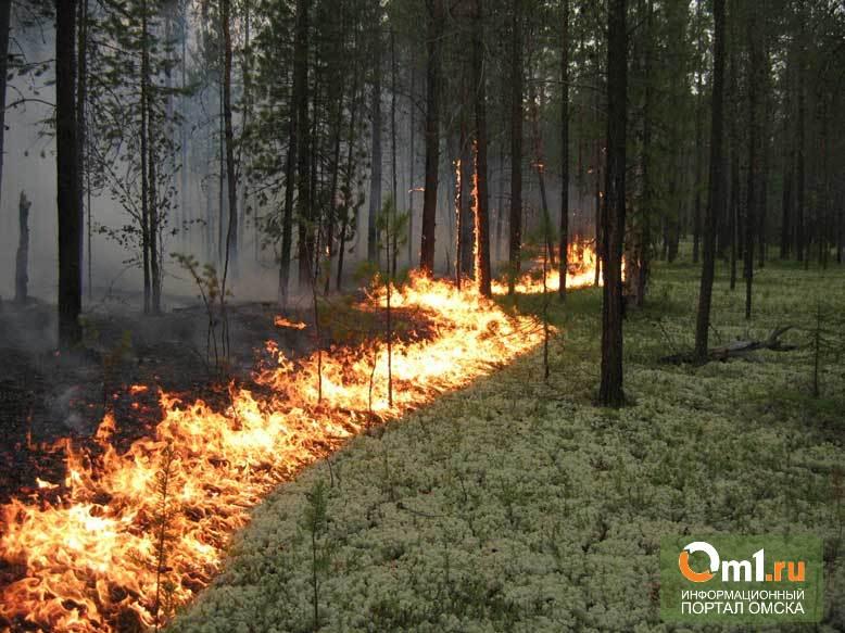 Угроза пожаров в лесах Омской области достигла критического уровня