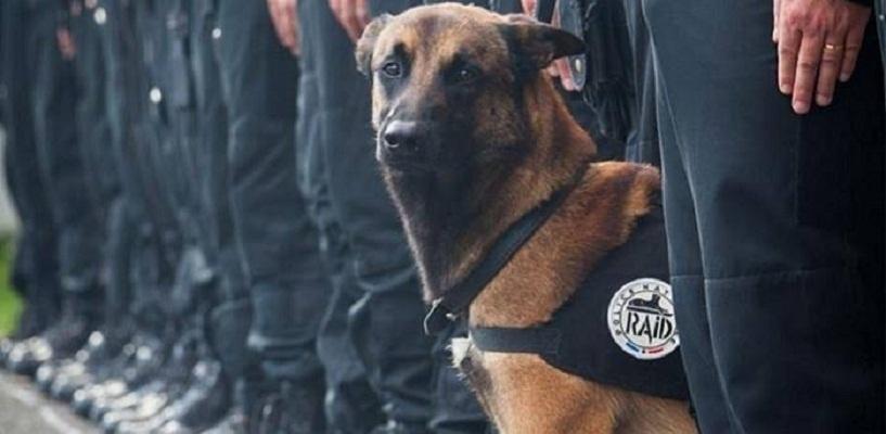 «Je suis Diesel»: российские кинологи почтили память пса, погибшего в Париже