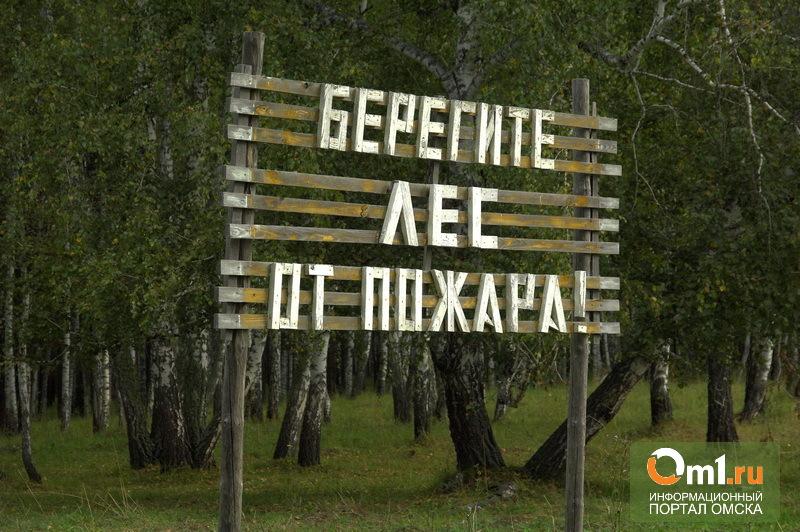 Омским лесам пока не угрожают пожары