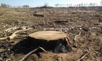 На севере Омской области некто напилил леса на три миллиона