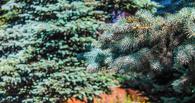 В омском сквере Дзержинского снесут больше деревьев, чем было в планах