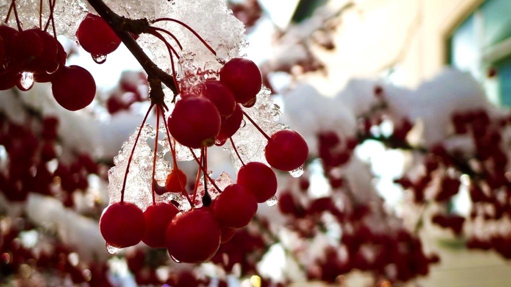 Заледеневшие ягоды  № 777720 без смс