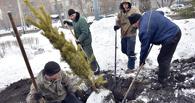 В администрации Омска подвели итоги компенсационного озеленения территории города