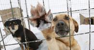 В Омске более 10 млн рублей выделили на отлов бродячих животных