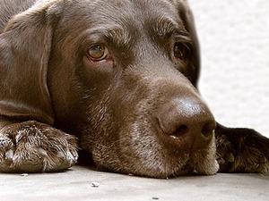 Горсовет не позволил омичам «заказывать» бродячих собак