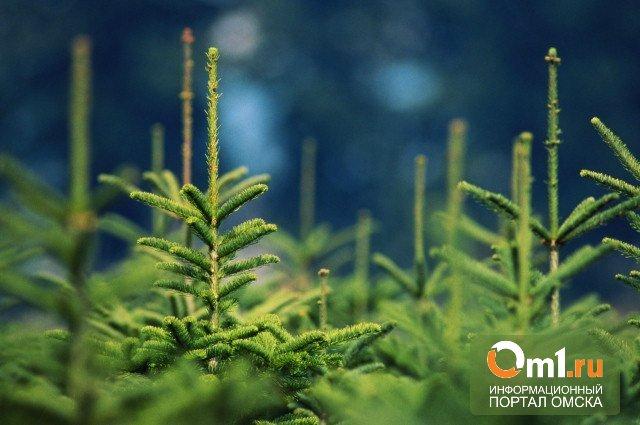 Мэрия расставила по Омску 887 елок к Новому году