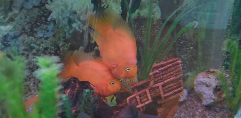 Скандальный аквариум омского минимущества подарили детям (фото)
