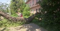 Упавшее в Омске дерево лишило жителей электричества