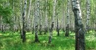 Омский лесхоз заставлял своих арендаторов самостоятельно тушить пожары