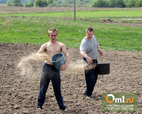 Омская область готовится к посевной кампании