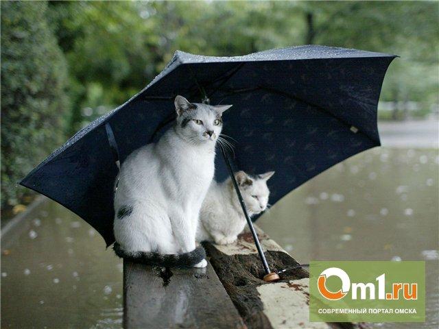 Все выходные Омск будет заливать дождями
