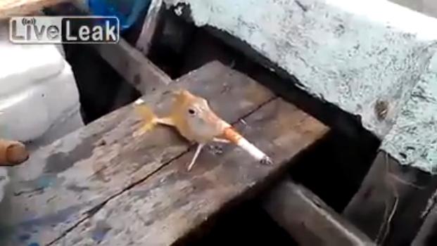 Зоозащитники негодуют по поводу ролика с курящей рыбой