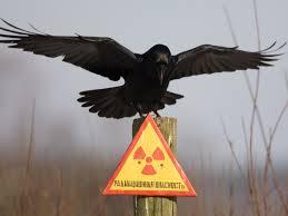 Мэрия назвала десять опасных мест у Иртыша, где гибнут омичи