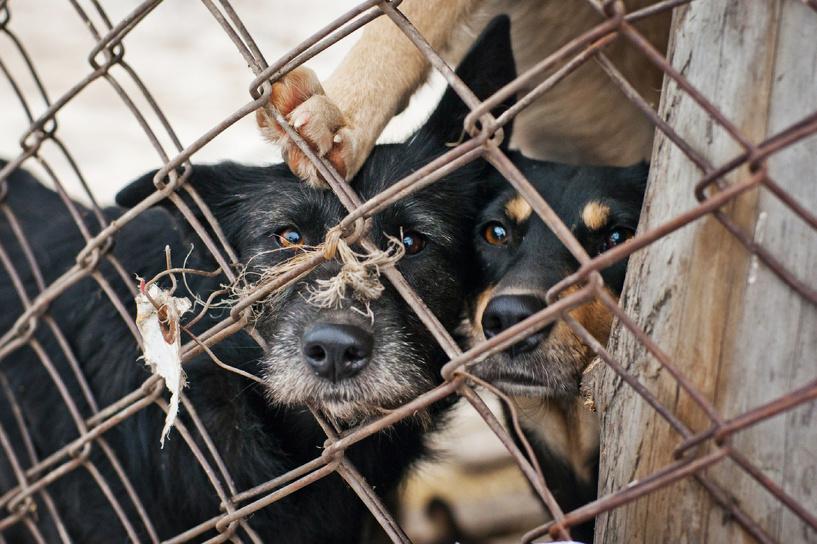 Омичей просят помочь найти хозяев для собак из приюта на Барабинской