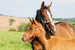 Как провести выходные в Омске: лошадиные скачки и турнир по нардам