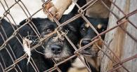 В Омске сотня бездомных собак ждет приговора от мэрии