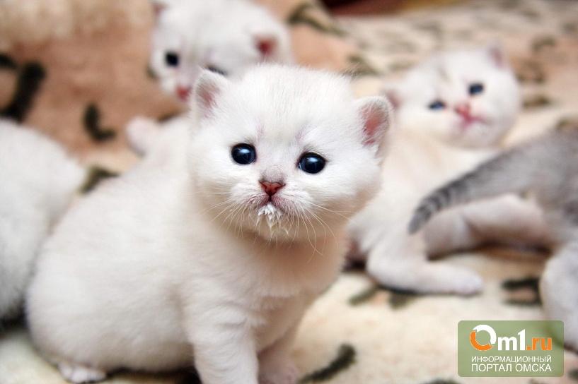 После того, как омич топил котят, депутаты ЗС хотят обратиться в Госдуму