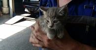 В Омске спасли котенка-сургутянина, забравшегося в приборную панель автомобиля