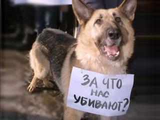 В Омске живодер сбросил собаку с восьмого этажа