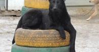Площадки для выгула и отстрел бездомных собак обсудили в мэрии Омска