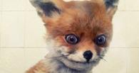 Житель Омской области украл из придорожного кафе чучело лисы