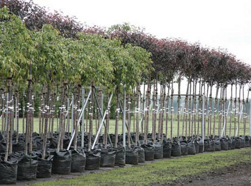 В Омске будут высаживать деревья до холодов