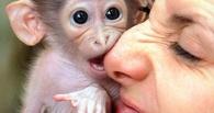 Омичей кусают обезьяны и летучие мыши