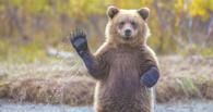 В Ханты-Мансийске спасатели и полицейские разыскивают медведя-людоеда