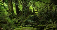 Житель Омска потерялся в лесу под Сочи