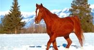 В Омске отца и сына посадили за кражу семи лошадей
