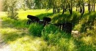 В Омской области пьяный механизатор опрокинул трактор в кювет