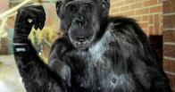 Американские зоозащитники просят считать шимпанзе личностью