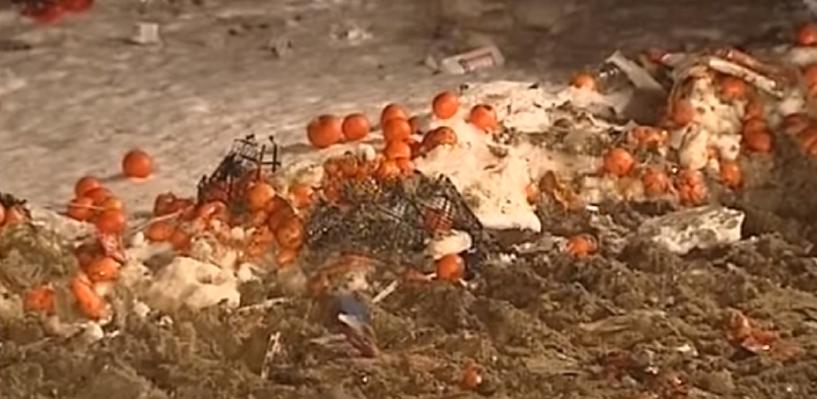 Россельхознадзор задавил бульдозером 225 килограмм турецких мандаринов