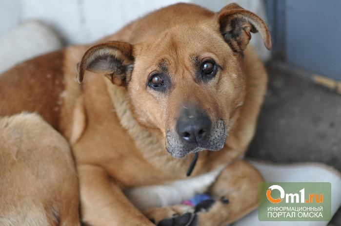 В Омске на отлов и содержание бездомных собак будет направлено 30 миллионов рублей