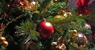 В Омске начали срубать елки и сосны к Новому году